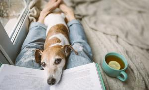 2020/04/ksiazki-o-zwierzetach-ktore-warto-poznac-reading-at-home-with-pet-cozy-home-weekend-with-interesting-book-dog-picture-id1132975333.jpg