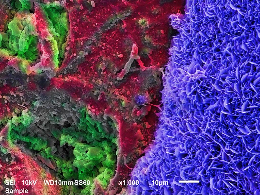 Zdjęcie Polaka wygrało konkurs Wiki Science Competition