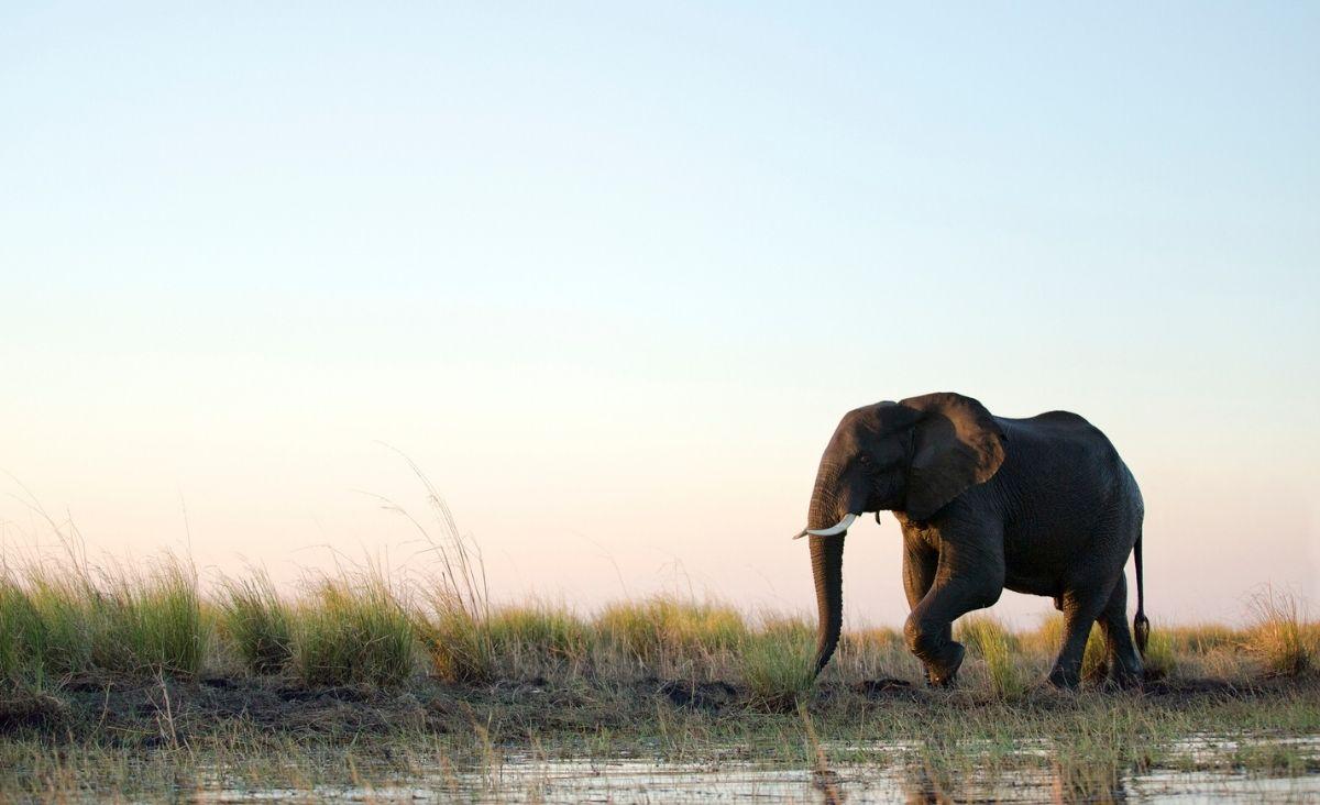 Zjadaj słonia po kawałku - jak metodą małych kroków zmienić życie
