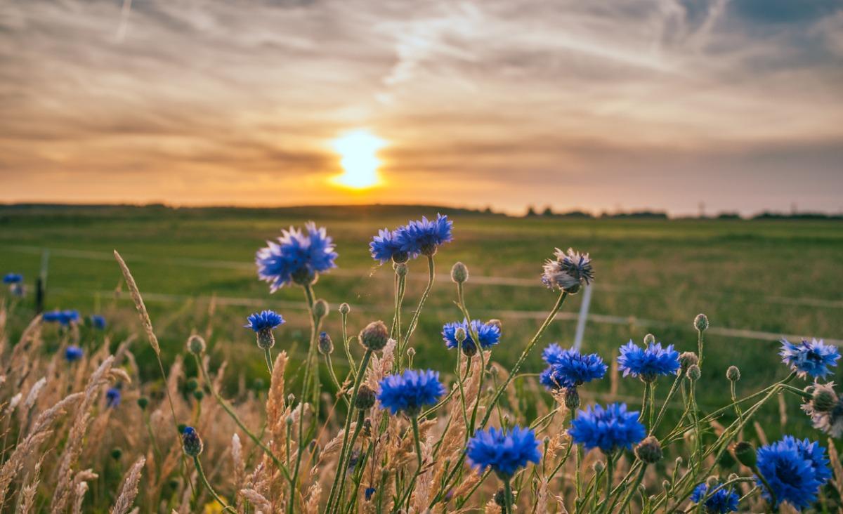 Dary Natury: Lecznicza moc chabrów