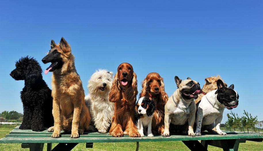 Tomasz Jastrun: Psy mojego sumienia