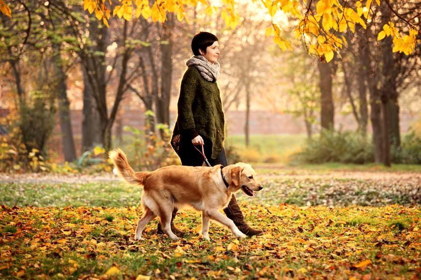 Pochwała spaceru