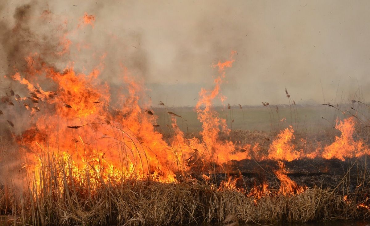 Płonie Biebrzański Park Narodowy - możemy wesprzeć strażaków