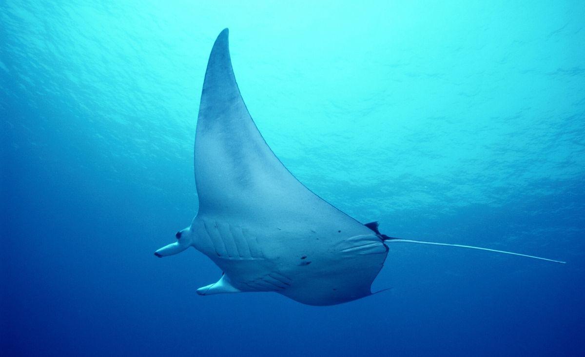 Oceany - pełne życia, piękna i plastiku…