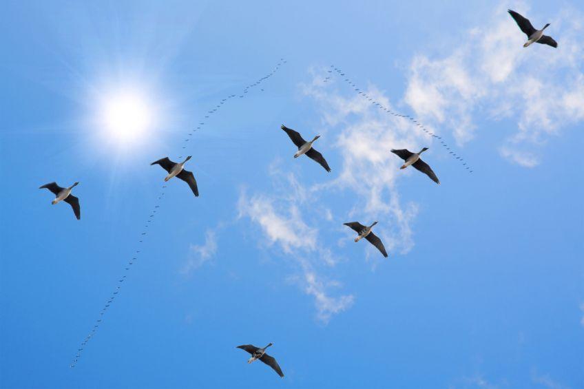 Ptakoliczenie zakończone