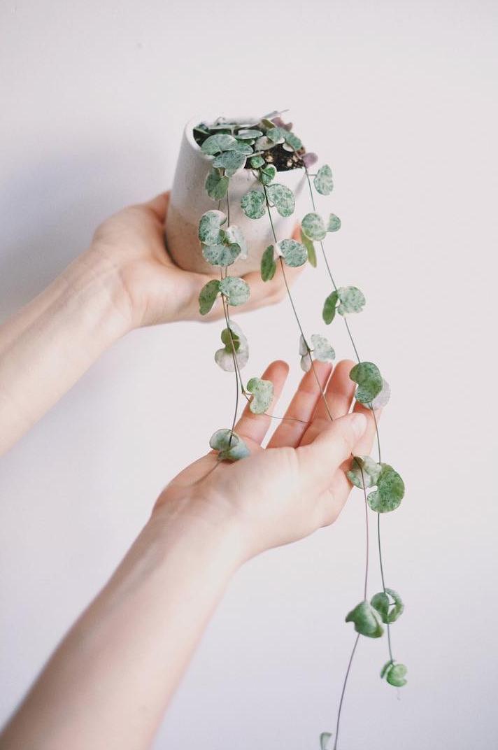 Najpiękniejsze rośliny doniczkowe według dziewczyn z Projektu Rośliny