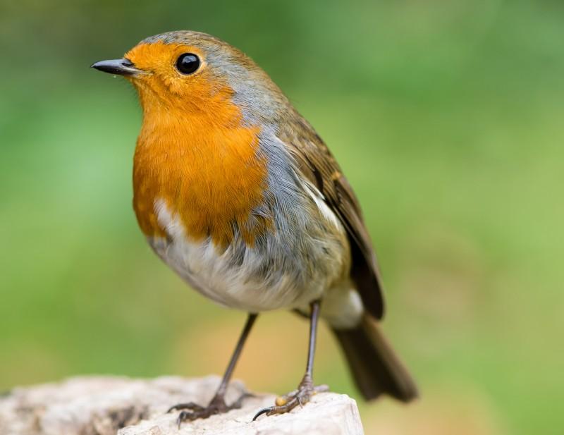 obserwowanie ptaków