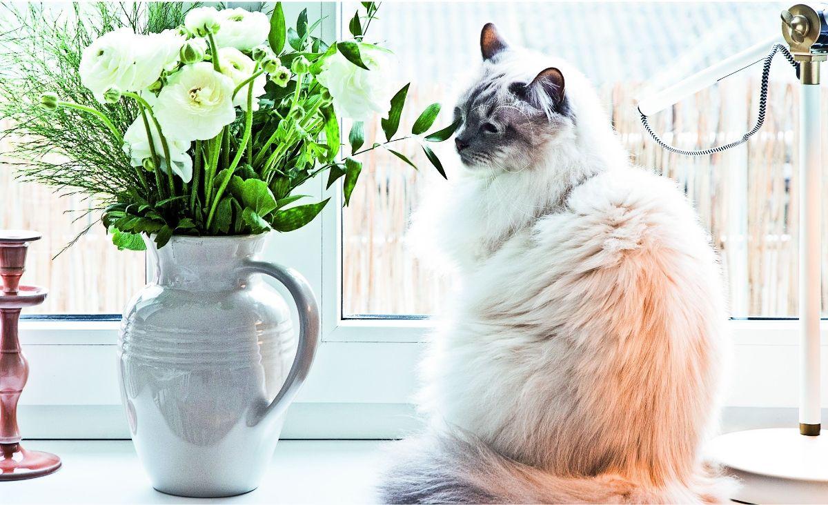 Nawet umaszczenie kota pasuje do jasnego wnętrza (Fot. materiały Westwing)