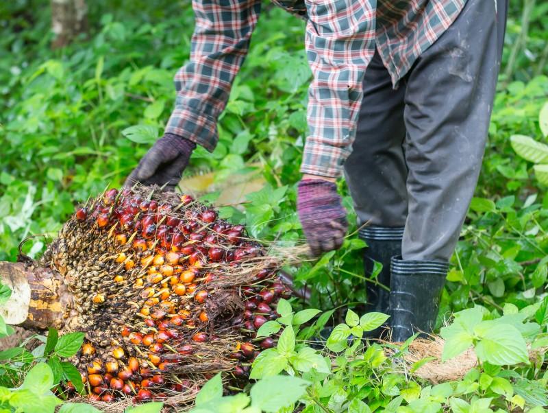 olej palmowy jest szkodliwy