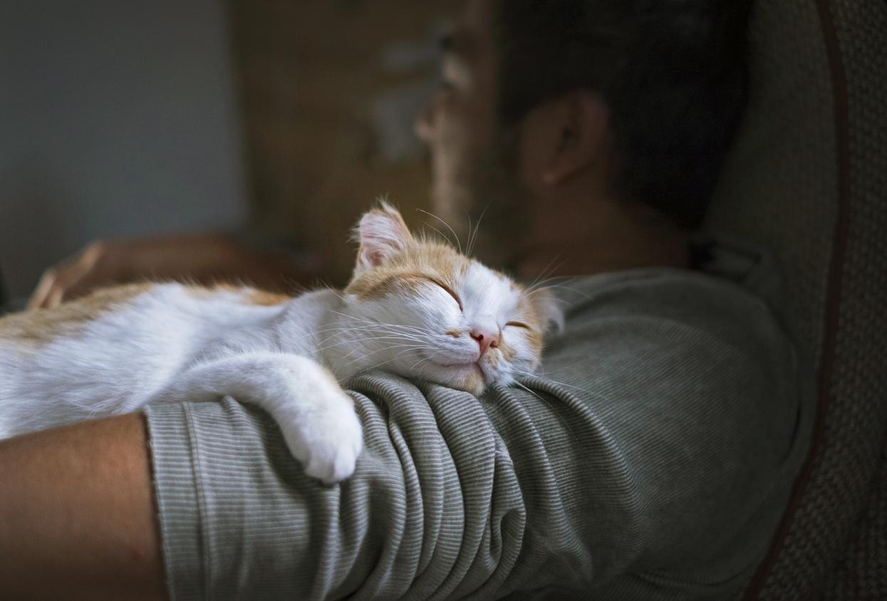 Kot wie lepiej - manifest bezproduktywności