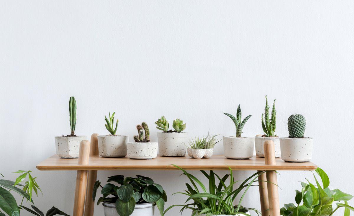 Supermoc z roślin - zaproś zieleń do domu