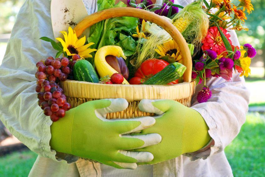 Święto owoców i warzyw