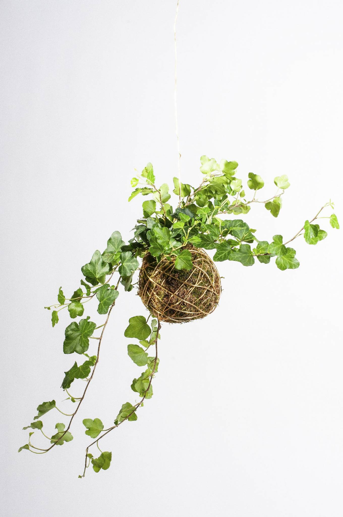 Biophilic design: roślinne kompozycje dla każdego