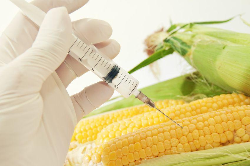GMO w Europie