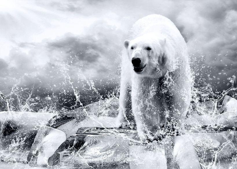 Zwierzęta maleją z powodu… ocieplenia klimatu