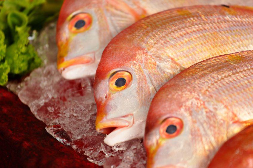 Rybę weźmij jaką chcesz