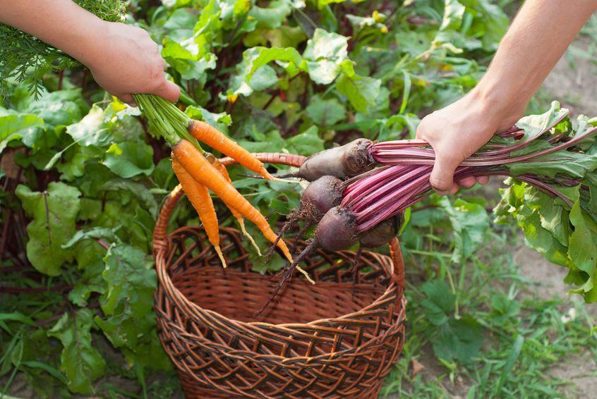 Jakie warzywa najlepiej jeść latem?