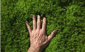 2020/04/za-co-kochamy-las-mans-hand-touches-a-green-forest-moss-picture-id1165298764.jpg