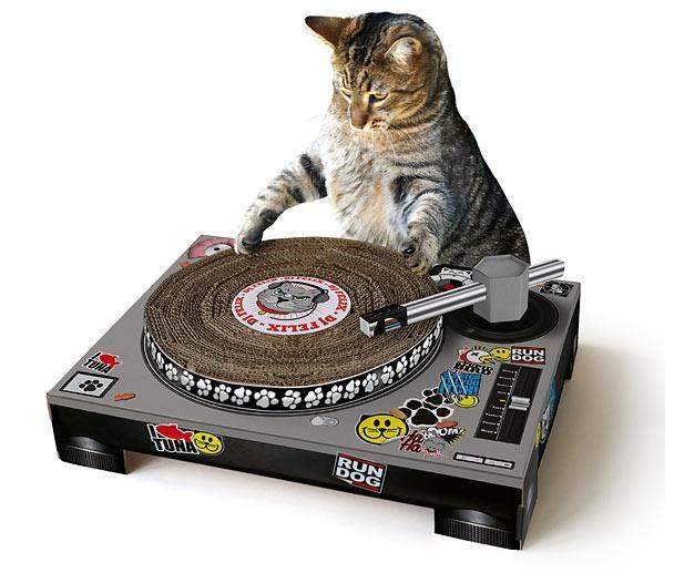 Kot w mieszkaniu: designerskie drapaki