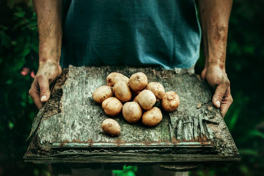 Ziemniaki - polskie superfoods?