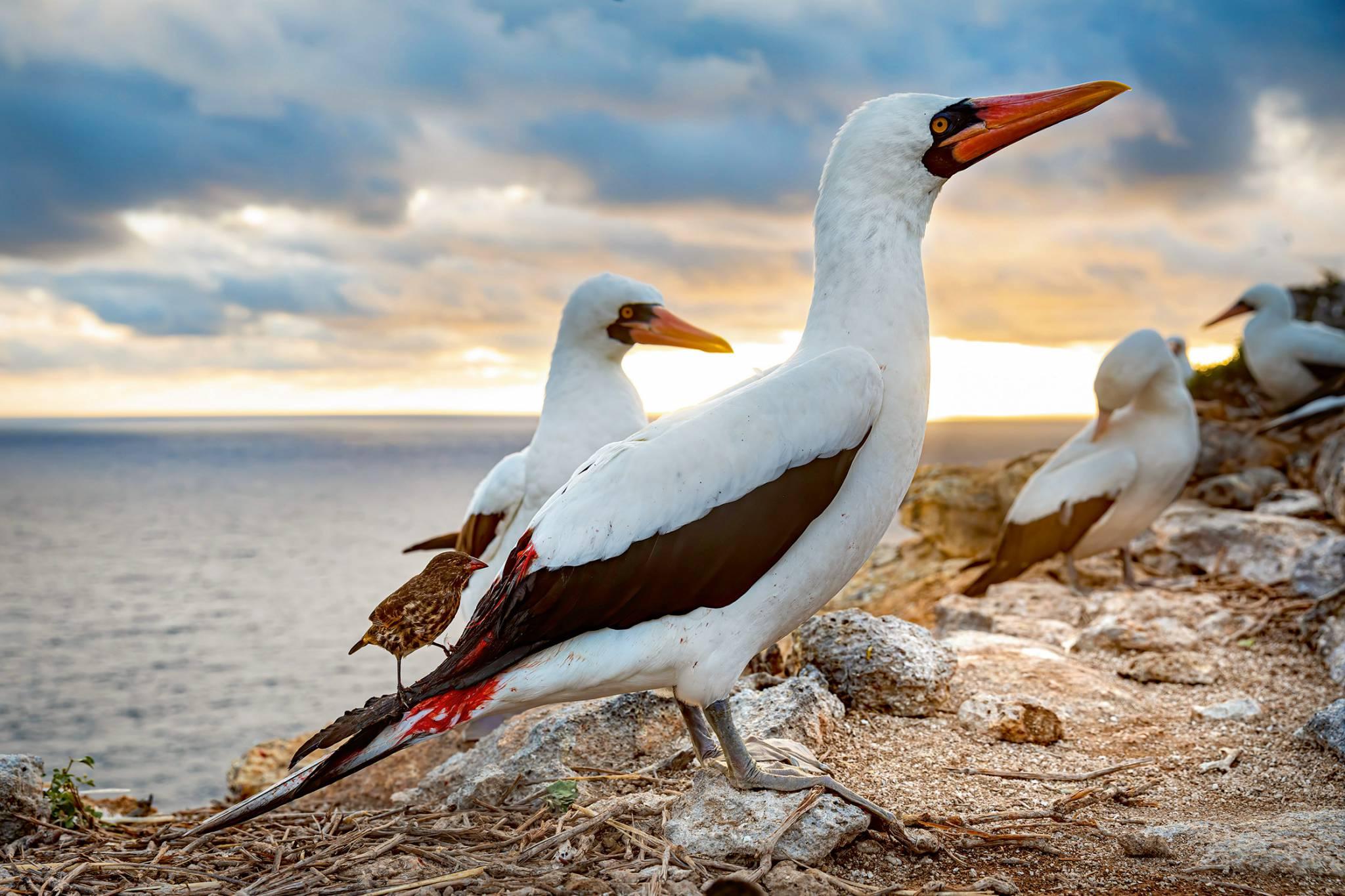 David Attenborough - pan od ekologicznej (r)ewolucji człowieka