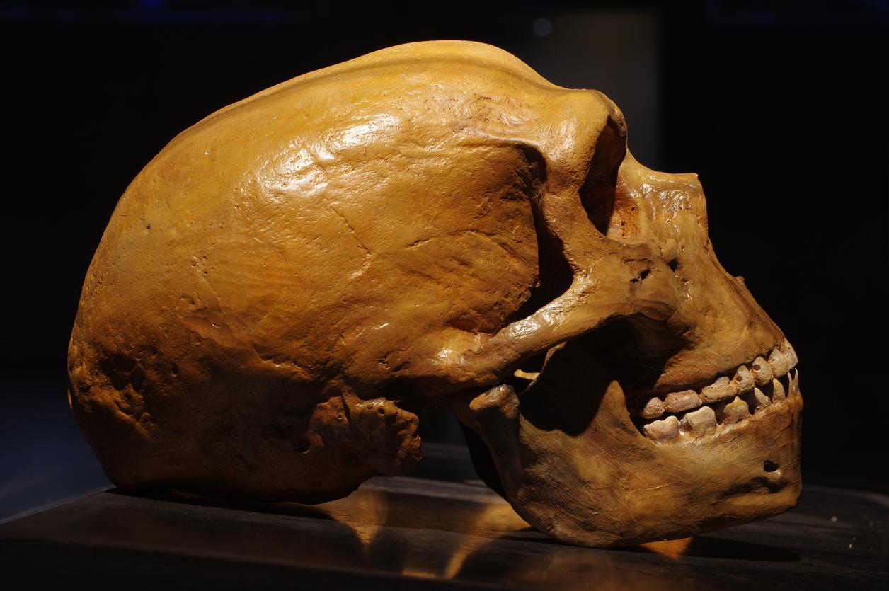 Ile w nas małpy, ile człowieka? – tłumaczy genetyk, prof. Ewa Bartnik