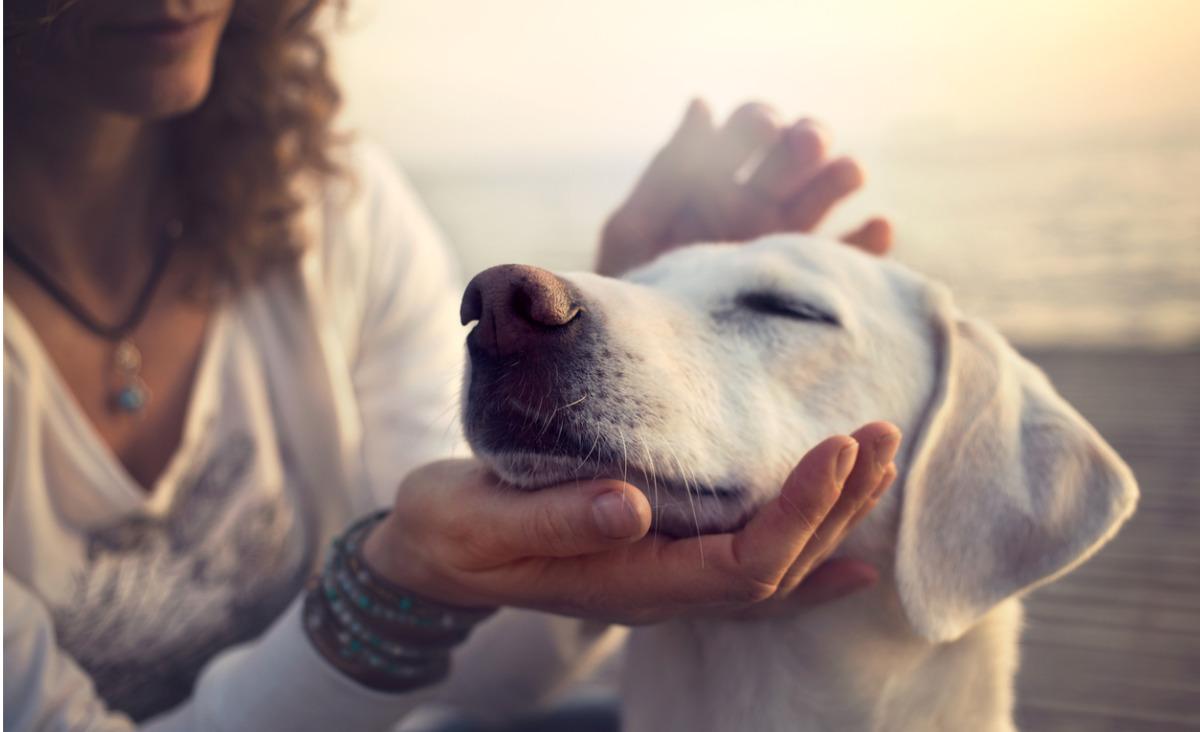 Jakie emocje odczuwają zwierzęta?