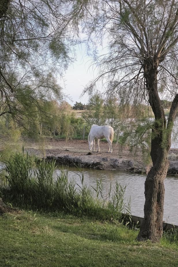 Camargue - harmonia pomiędzy przyrodą a człowiekiem