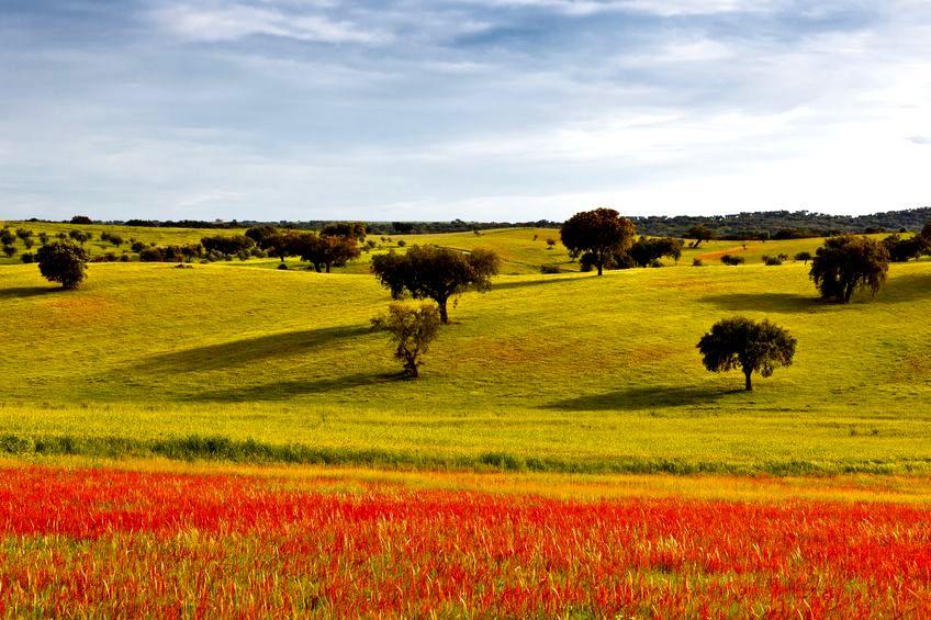 Susza w Portugalii