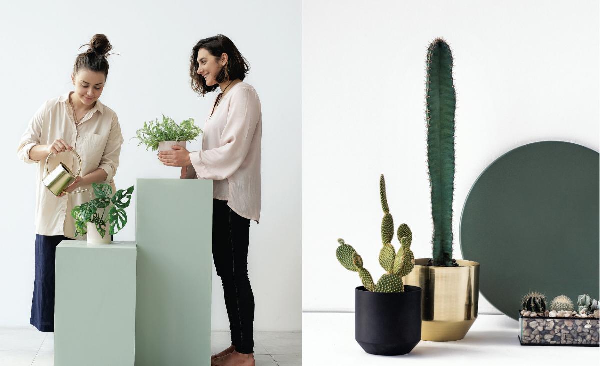 Projekt Rośliny - z miłości do paprotki