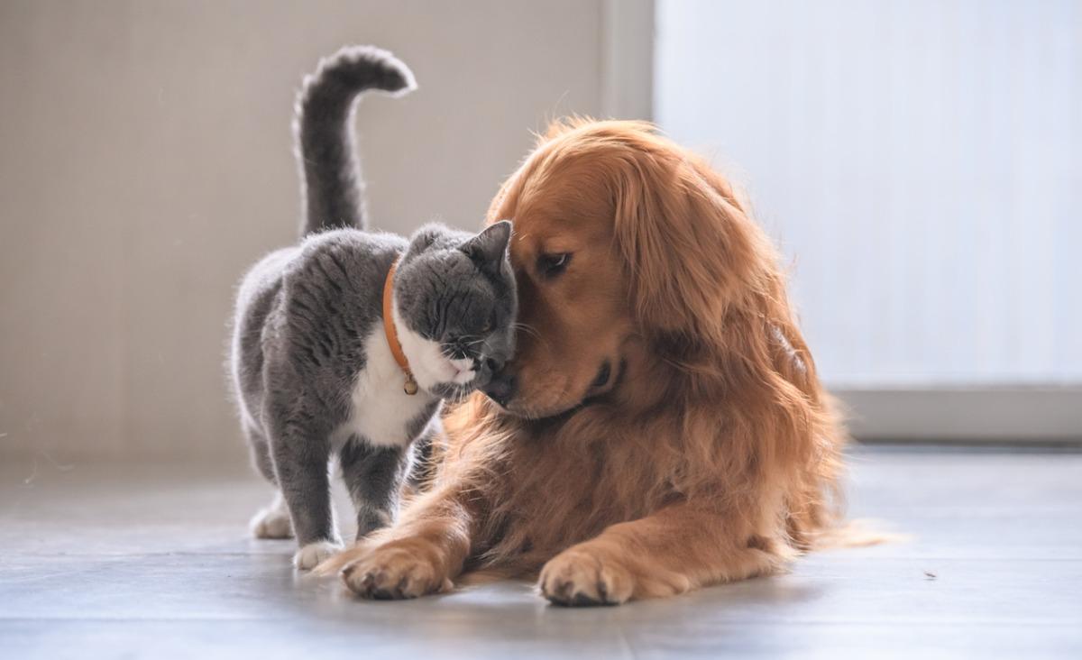 Psy i koty w domu - pielęgnacja i żywienie