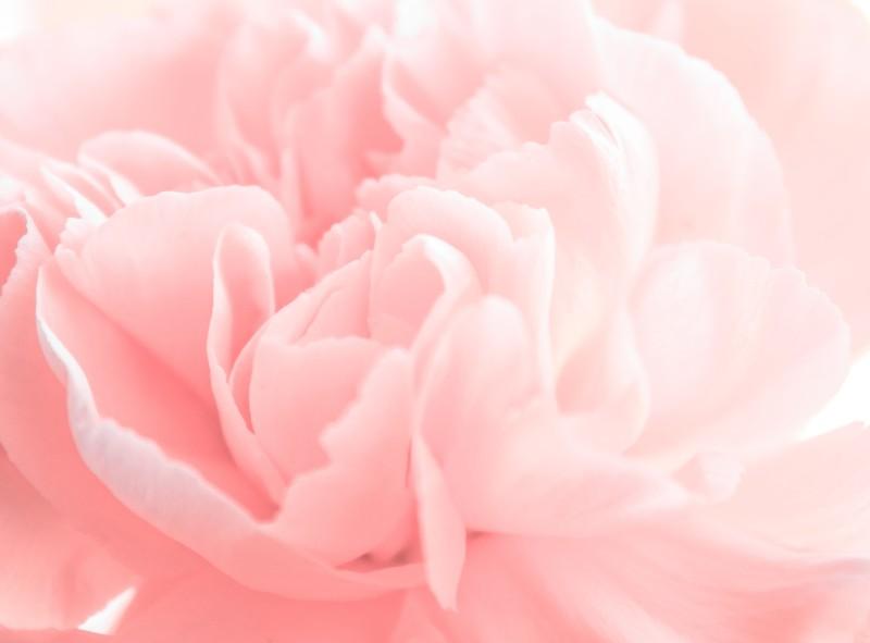 Kobiece i świeże - takie są aromaty kwiatowe. (i Stock)