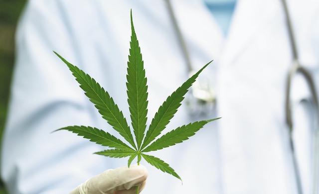 Co zrobić by legalnie leczyć się medyczną marihuaną?