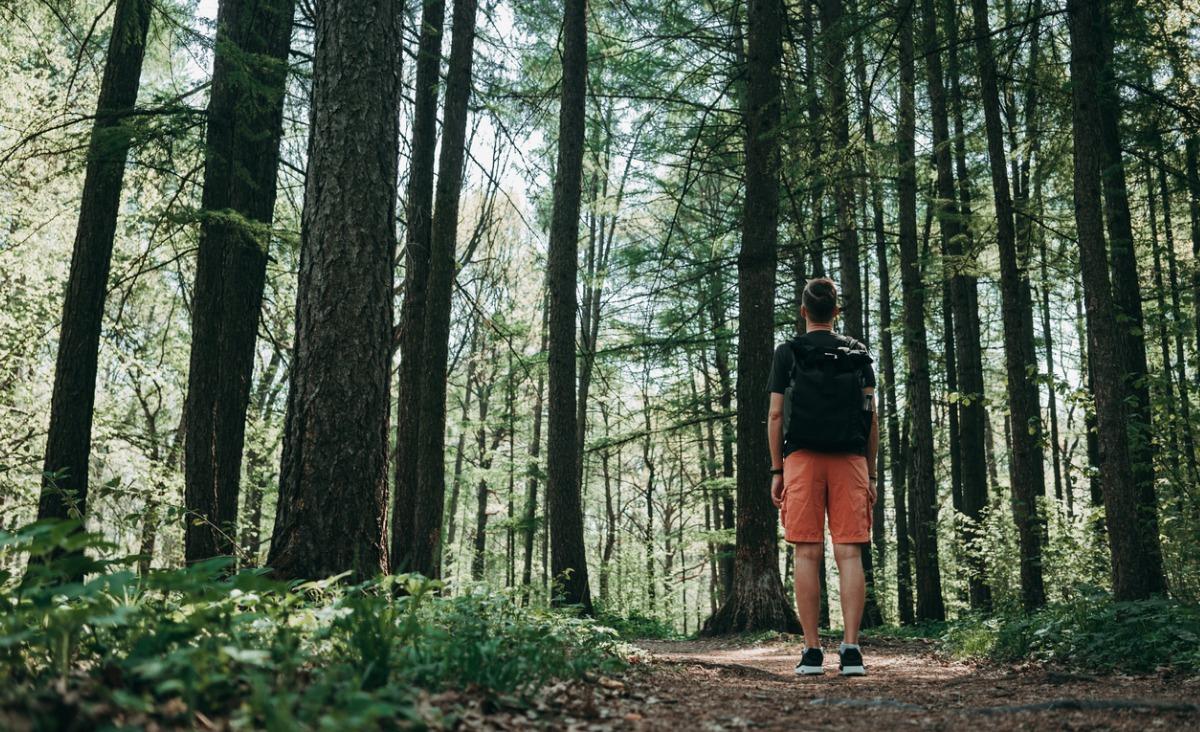 Las - miejsce duchowej kontemplacji