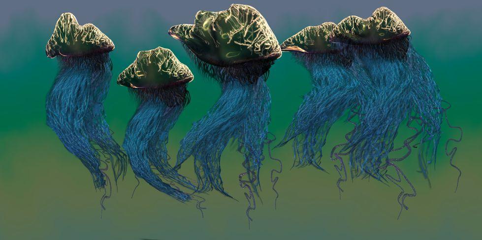 Co robić w przypadku poparzenia przez meduzę?