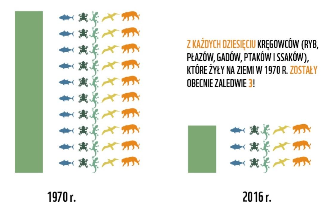 Living Planet Report 2020 – w jakiej kondycji jest Ziemia i żyjące na niej gatunki?