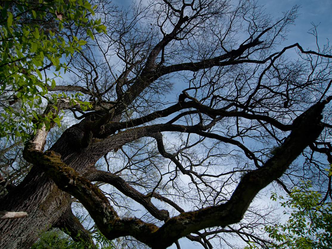 Drzewo Roku 2013