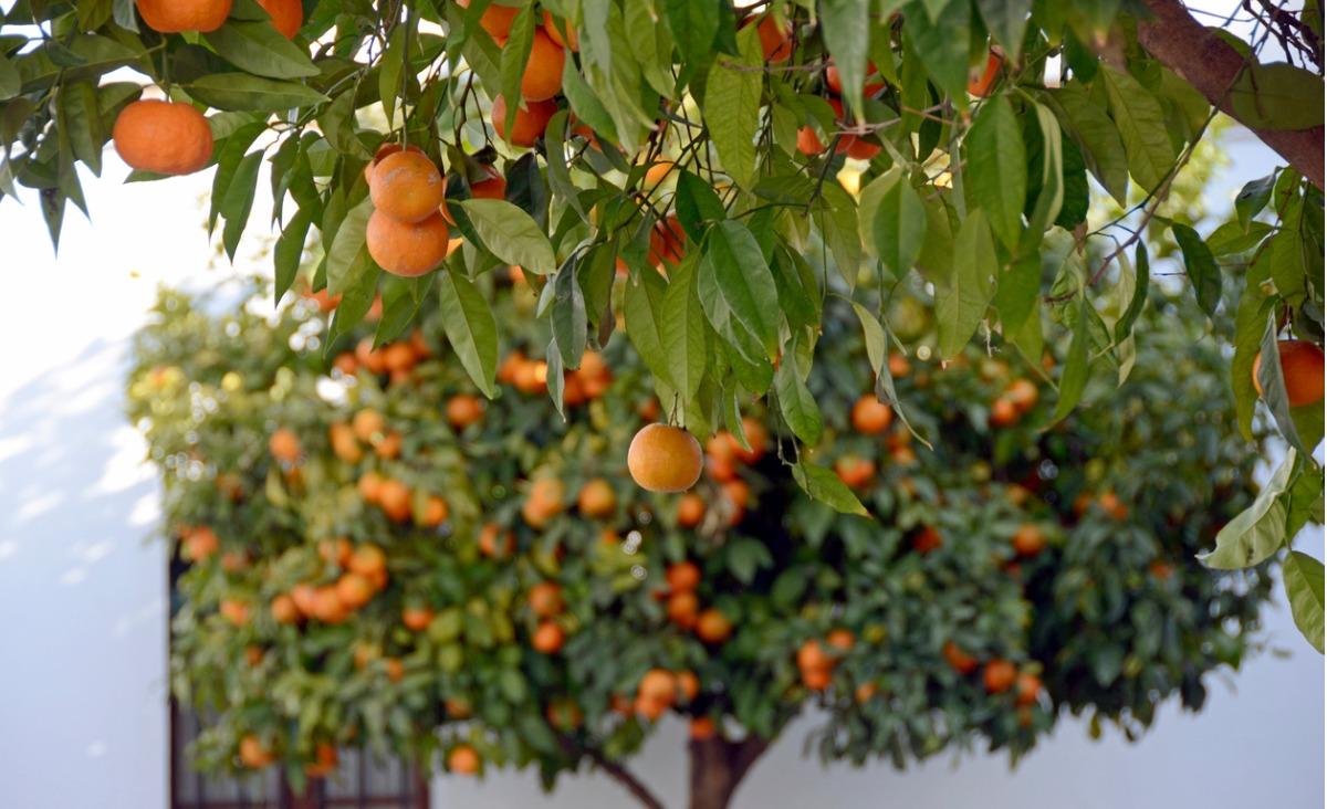 """Pomarańczowa energia – ile można """"wycisnąć"""" ze sfermentowanych odpadów?"""