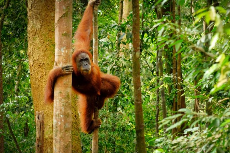 olej palmowy szkodliwy