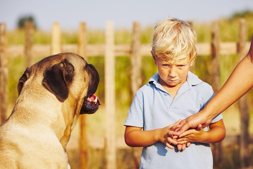 Gdy dziecko boi się psów