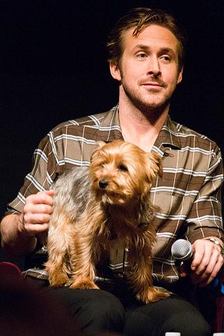 Ryan Gosling przeciwko niehumanitarnej hodowli zwierząt