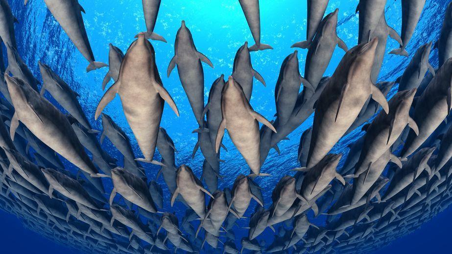 Delfiny jak my