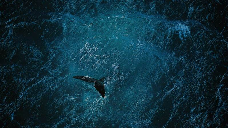 """Dziś Światowy Dzień Oceanów. Film """"Planet Ocean"""""""
