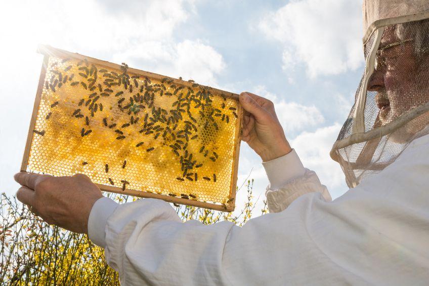 """Czym grozi wyginięcie pszczół?""""Bee or not to be"""""""