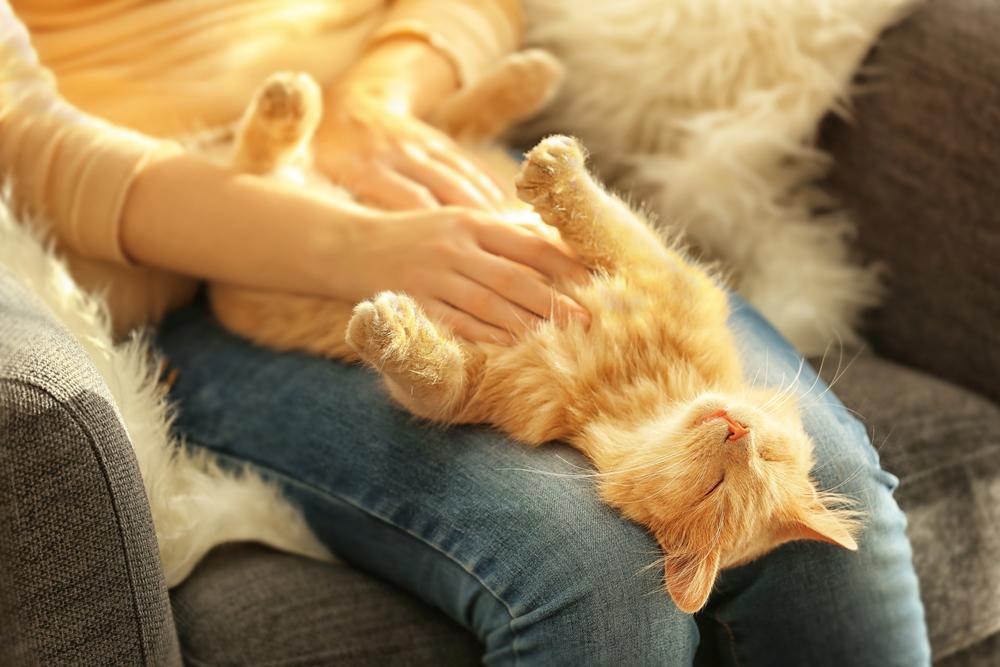 Nowoczesny towarzysz – kot