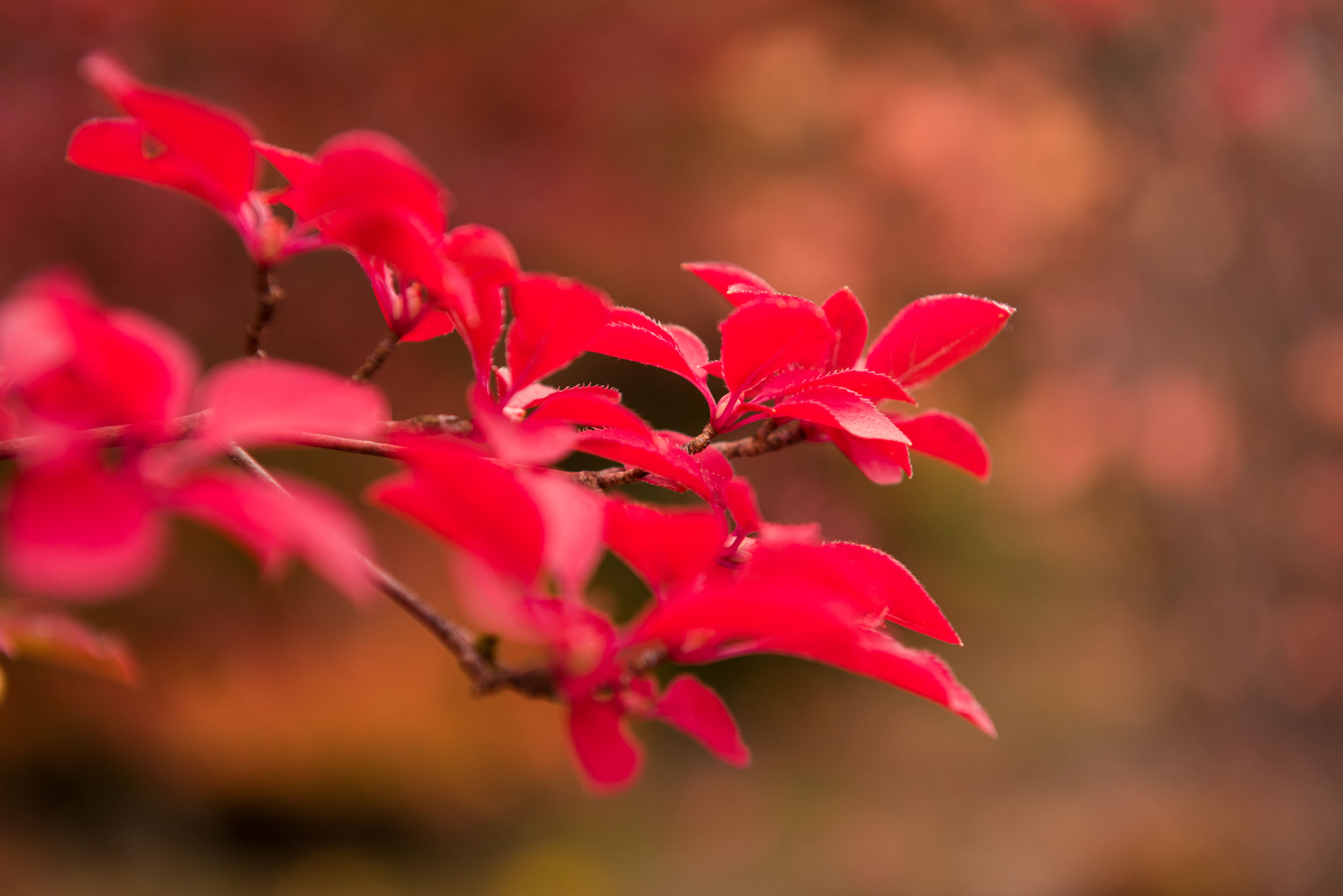46733866 - autumn botany background