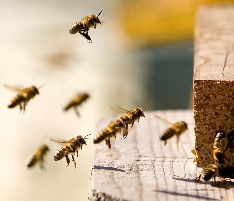 Na ratunek pszczołom