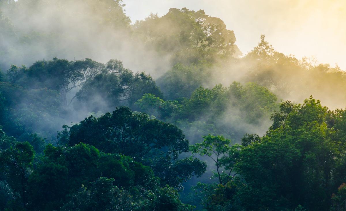 Nature Soundmap - kolekcja ponad 400 naturalnych nagrań przyrody z całego świata dostępna za darmo