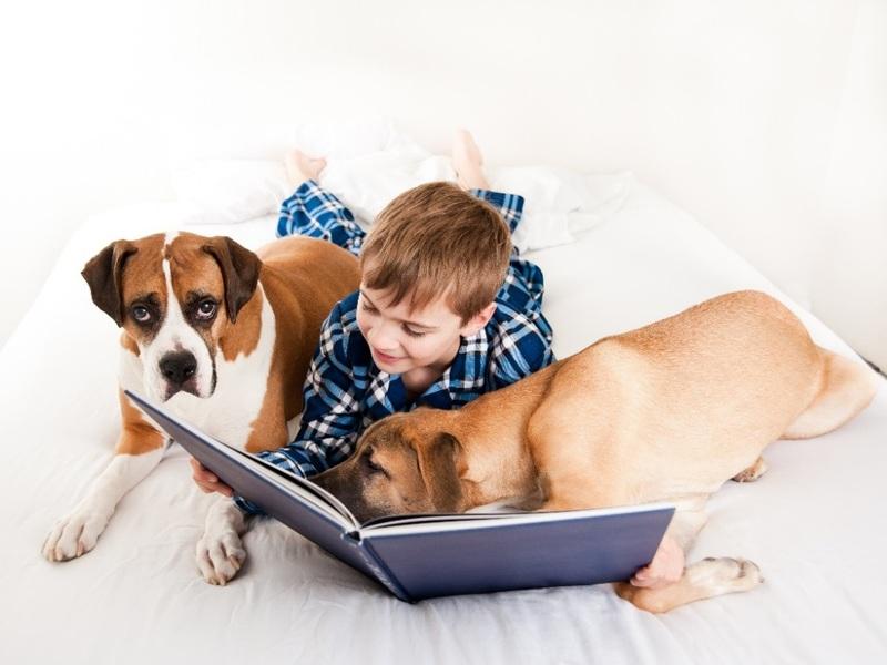 Czy wspólne łóżko z psem albo kotem to dobry pomysł?