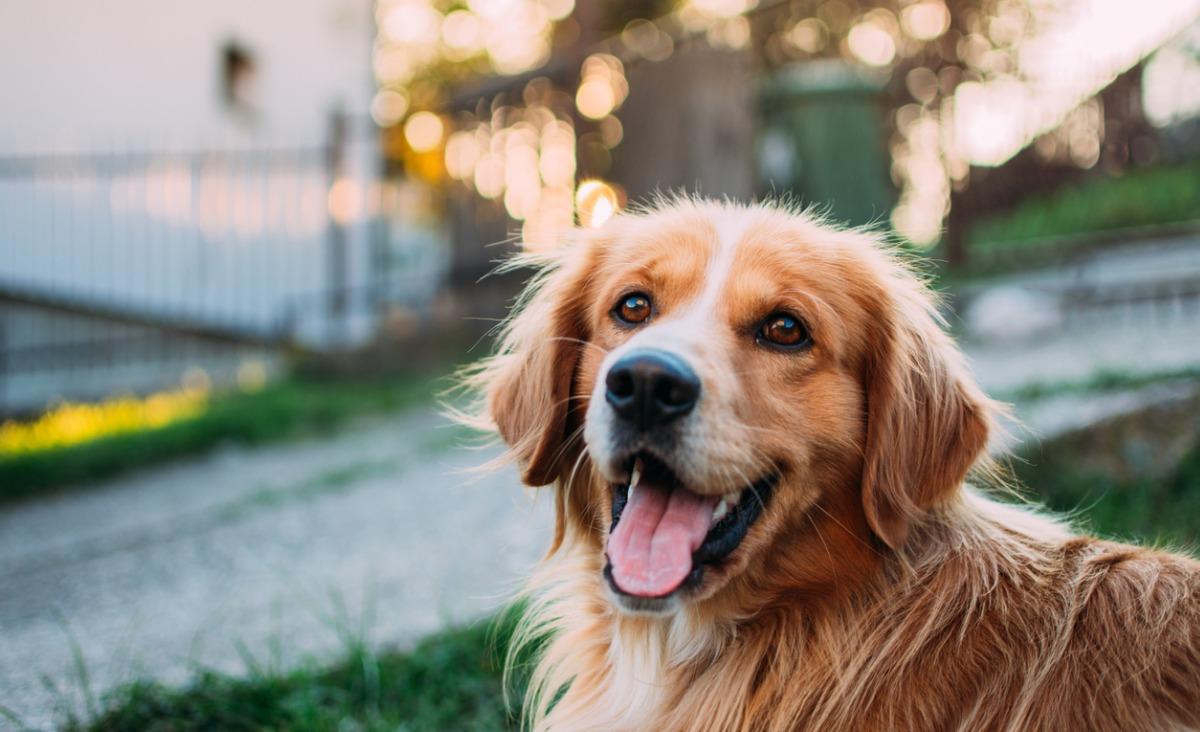 Nie maskotka a członek rodziny. Czego możesz nauczyć się od swojego psa?